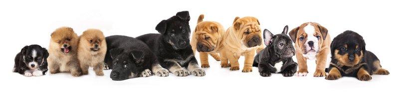 banner met allerlei honden