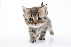 foto kitten