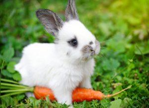 foto konijntje