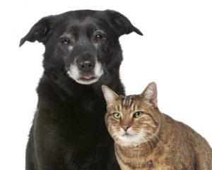 oude-kat-en-hond